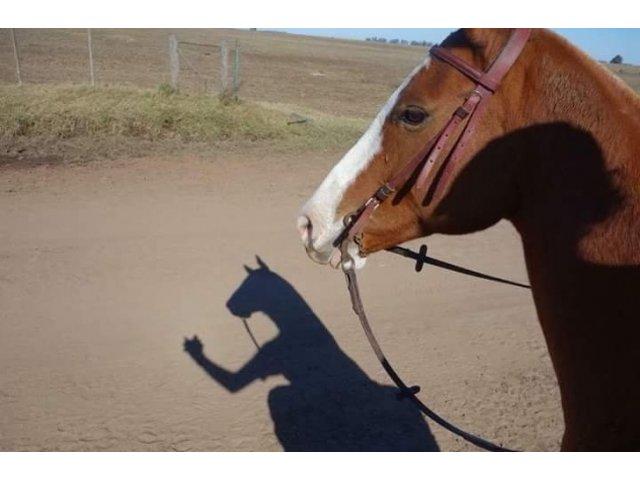 10+ imagini amuzante care te-ar putea face sa te indoiesti de ceea ce vezi
