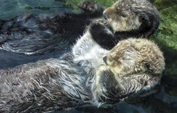 15 curiozitati despre animale: de la motivul pentru care ursii se rostogolesc in zapada pana la gestul facut de vidre cand dorm