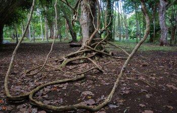 Desprinsi din filmele SF? 15+ copaci cu forme de-a dreptul neobisnuite