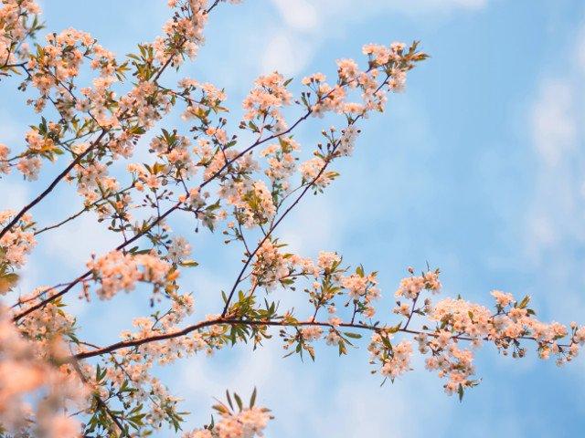 Echinoctiu de primavara 2019. Cand incepe primavara astronomica