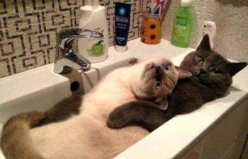 10+ imagini amuzante cu pisici surprinse in momente... nepotrivite