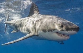17 specii de rechini sunt in pericol de disparitie