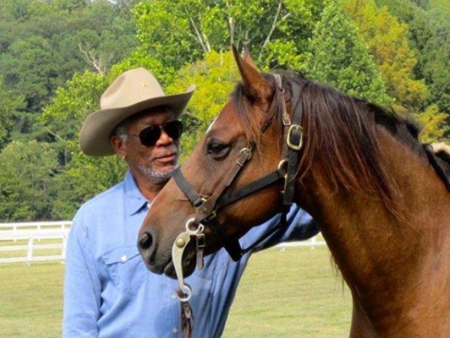 Morgan Freeman si-a transformat ferma intr-un sanctuar menit sa salveze albinele si Pamantul