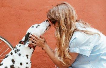 Nu uita persoanele cu care intra in contact de-a lungul vietii: 10+ curiozitati despre dalmatieni