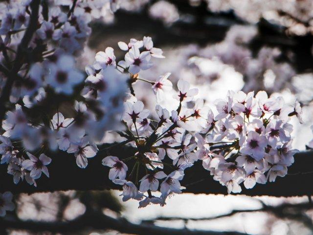 Cum se anunta vremea de Florii si de Paste