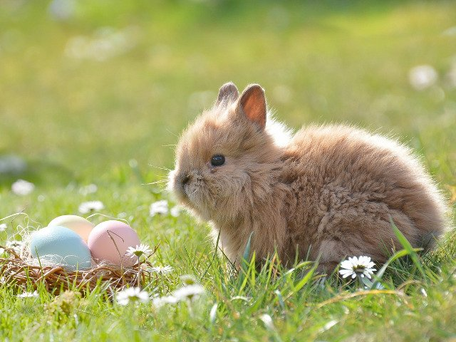 10+ curiozitati despre iepuri. Dorm cu ochii deschisi si pot sari pana la 3 metri in lungime