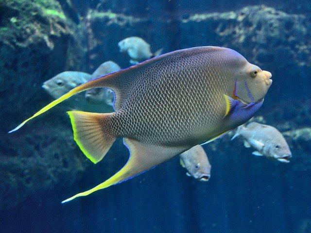 O adaptare genetica unica permite unor pesti de mare adancime sa vada color in intuneric