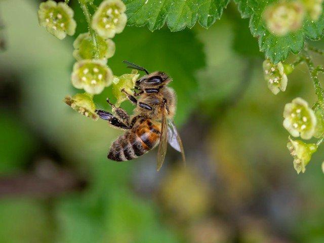 Un barbat intepat de un roi de albine a decedat in urma unui soc anafilactic