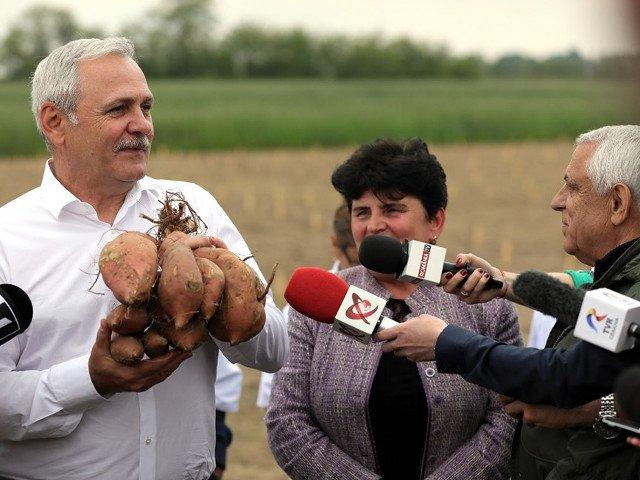 Dragnea: Programele pe care le-am gandit pentru agricultura aduc pe masa romanilor produse sanatoase