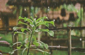 Cod galben de ploi pentru 16 judete, pana duminica dimineata. Instabilitate atmosferica in toata tara, pana marti dimineata