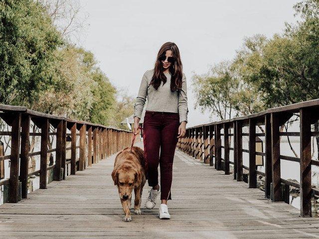 Studiu: Preferinta pentru caini ca animale de companie ar putea fi influentata de ADN