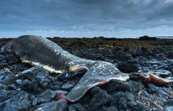 Casalot de 7 ani cu stomacul plin de deseuri din plastic, gasit mort pe o plaja din Sicilia