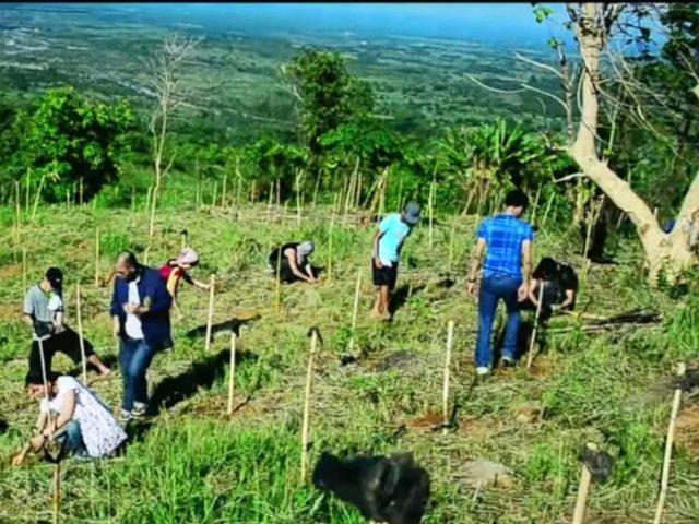 O noua lege in Filipine: daca vor sa promoveze scoala, elevii si studentii trebuie sa planteze 10 copaci