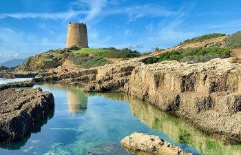 Sardinia, afectata de cea mai grava invazie de lacuste din ultimii 70 de ani/ VIDEO
