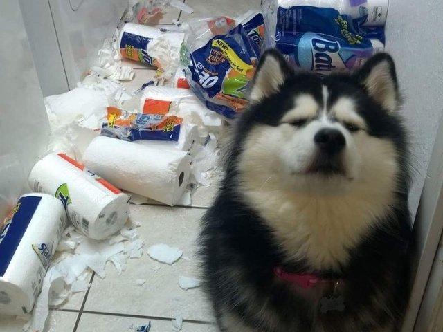 """Prinse in fapt: 10+ imagini amuzante cu animale de la locul """"dezastrului"""""""