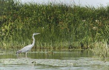 USR: Delta Dunarii ajunge in mainile baronilor locali PSD