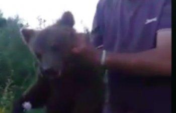 Pui de urs, chinuit de mai multi barbati, dupa ce a fost gasit langa o padure