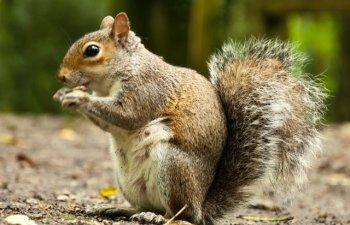 Un barbat din Alabama a dopat o veverita cu metamfetamina pentru a o face un animal de atac/ VIDEO