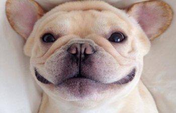 Stau la poza mai bine decat tine! 10+ animale care au cele mai cool selfie-uri