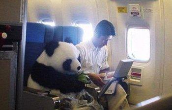 10 cele mai bizare (si amuzante) intamplari din avion, in imagini de-a dreptul hilare