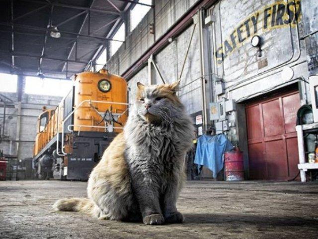 """10+ pisici surprinse in timpul programului de """"lucru"""""""