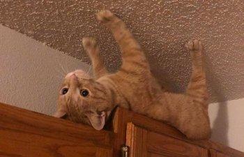 10+ imagini amuzante cu pisici surprinse in cele mai ciudate ipostaze