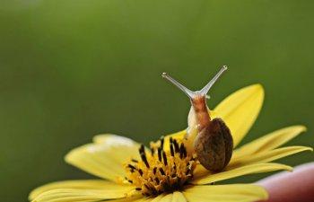 Cel mai mic melc ar putea intra prin urechea unui ac. 10+ lucruri fascinante despre mediul inconjurator