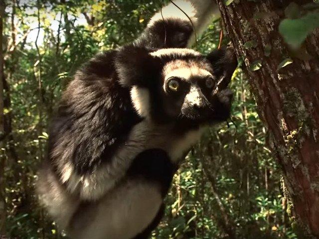 8 animale pe care nu le vei intalni niciodata la Gradina Zoologica