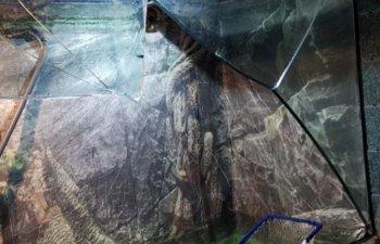 Constanta: Adolescenta ranita la Acvariu, dupa ce un bazin cu 4 tone de apa s-a spart