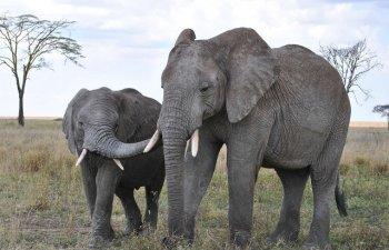 Victorie istorica - Este interzisa vanzarea de elefanti gradinilor zoologice