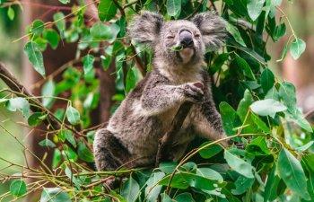 Viata in salbaticie: 15+ fotografii impresionante cu animale suprinse in habitatul lor natural