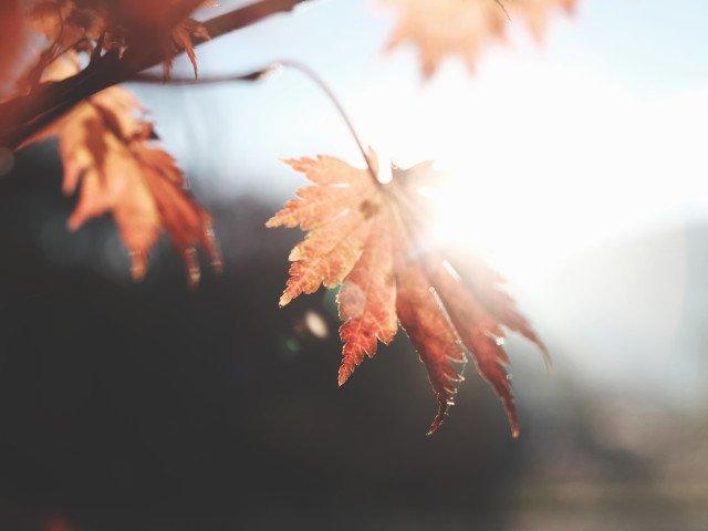 Se raceste vremea treptat, in septembrie. Temperaturile vor ajunge la nivelul normal pentru inceputul toamnei