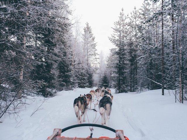 Finlanda, desemnata cea mai buna destinatie de calatorie in salbaticie a anului 2019
