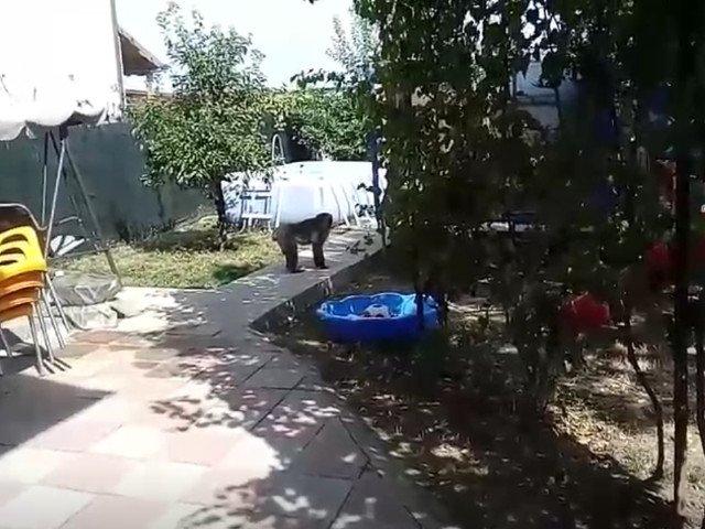 O maimuta se plimba libera prin Capitala. Au fost chemati jandarmii