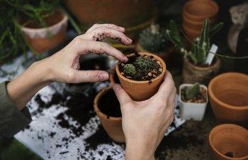 Ai grija ce plantezi in gradina: 10 flori despre care nu stiai ca pot fi toxice