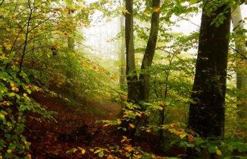 Peste 3.300 de copaci au fost taiati ilegal in Muntii Rodnei. Prejudiciul depaseste un milion de lei
