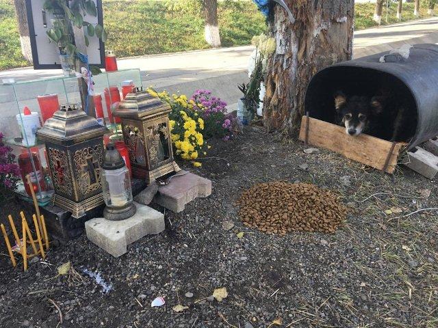 Hachiko de Romania: Un caine refuza sa plece din locul in care stapanul sau a facut accident si a murit