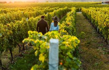 5 destinatii mai putin cunoscute pe care orice iubitor de vin ar trebui sa le bifeze