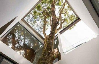 10+ imagini graitoare care demonstreaza ca putem trai in deplina armonie cu natura