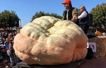 Un american a stabilit un nou record in SUA cu un dovleac de 986,5 kg