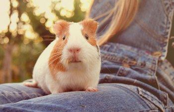 10 animale de companie pe care sa le iei in calcul, daca esti alergic la caini si pisici