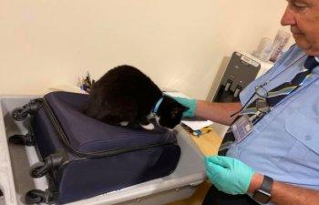Doi soti au descoperit in aeroport ca pisica lor s-a ascuns in bagajul de cala