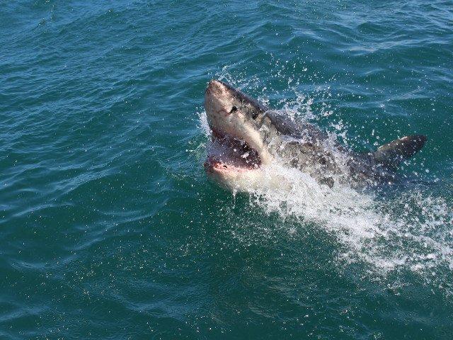 Mana unui turist de 44 de ani, descoperita in interiorul unui rechin