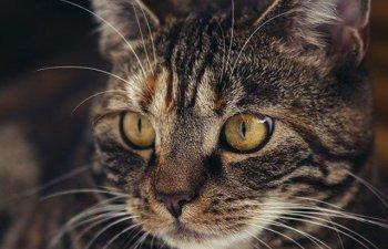 Un pasager care s-a imbarcat cu o pisica prea grea in avion, sanctionat cu pierderea punctele de loialitate
