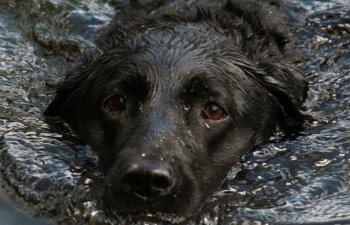 Trei femei s-au inecat in timp ce incercau sa salveze caini dintr-un adapost de animale inundat