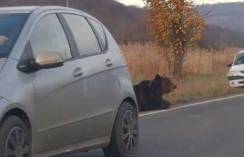 Prefectul de Harghita, demis dupa cazul ursului care a agonizat 18 ore