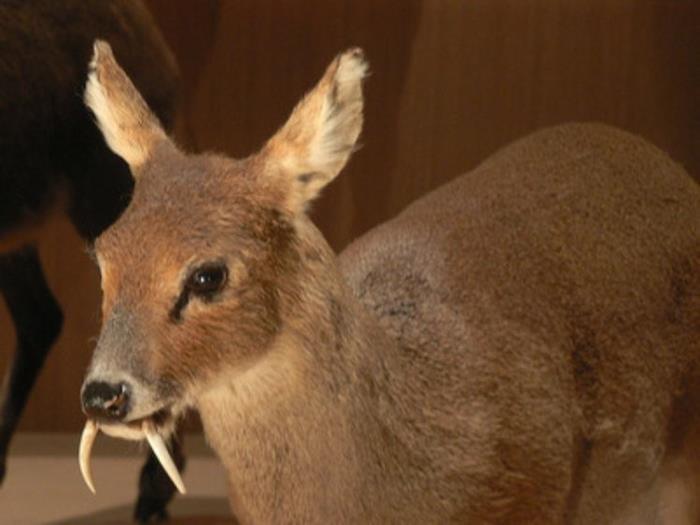 1. Bambi Vampir (AKA...
