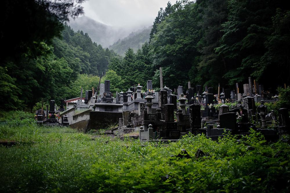 Imagini pentru Padurea Sinucigasilor din Japonia