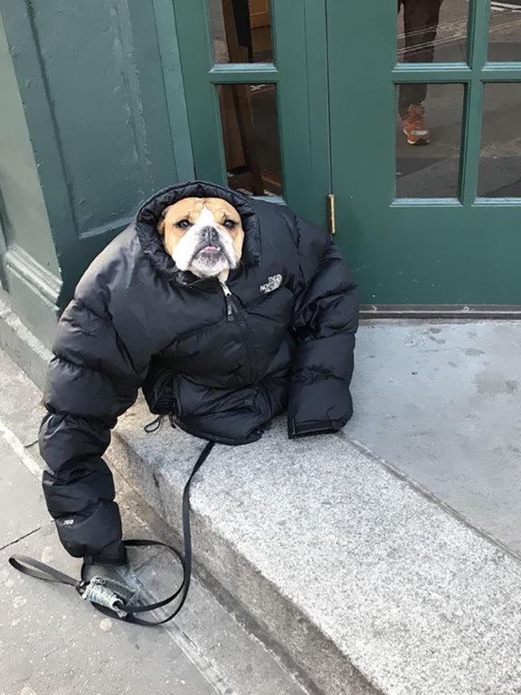 Atat de frig incat si cainele...