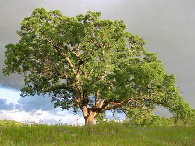Dintr-un copac de marime...